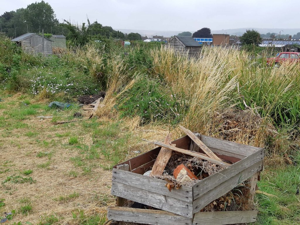 Overgrown allotment at Upper Beeding